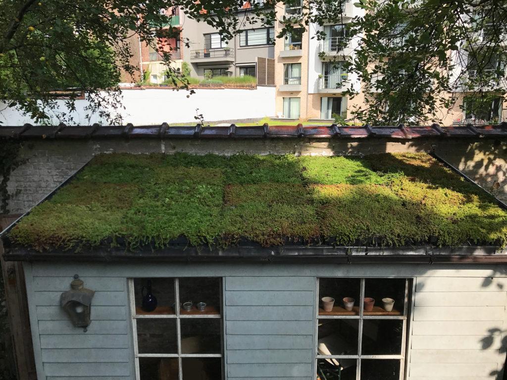 Toitures Jullien dakwerken toiture verte groendak ukkel